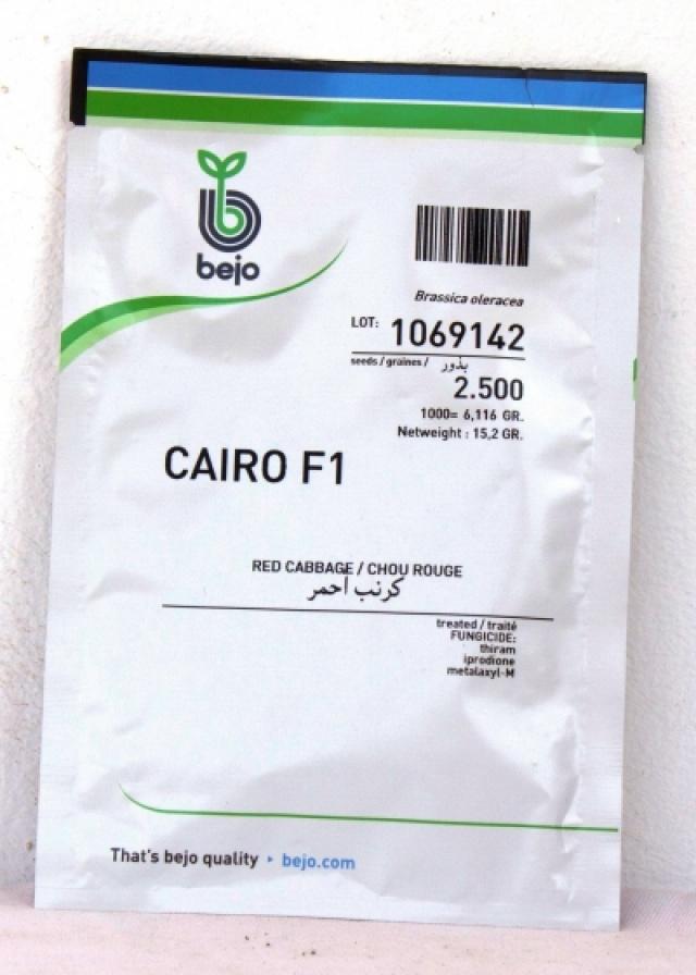 CAIRO F1 Choux rouge