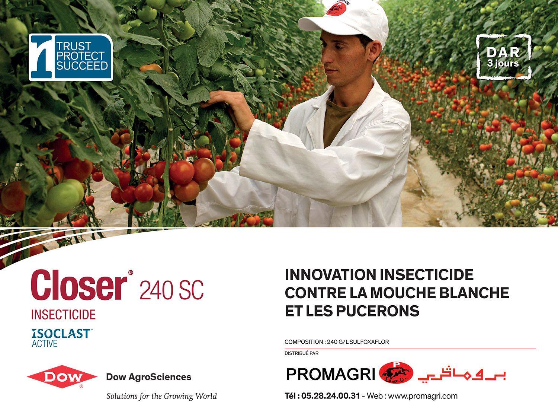 Maroc_4x3closer_v2